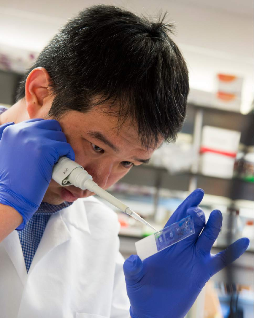 Rick Egan  |  The Salt Lake Tribune Wei-Chao Huang works in researcher Christopher Gregg's lab at the University of Utah. The team has explored cells in the brain and other regions in the body that preferentially activate one parent's copy of a gene over the other.