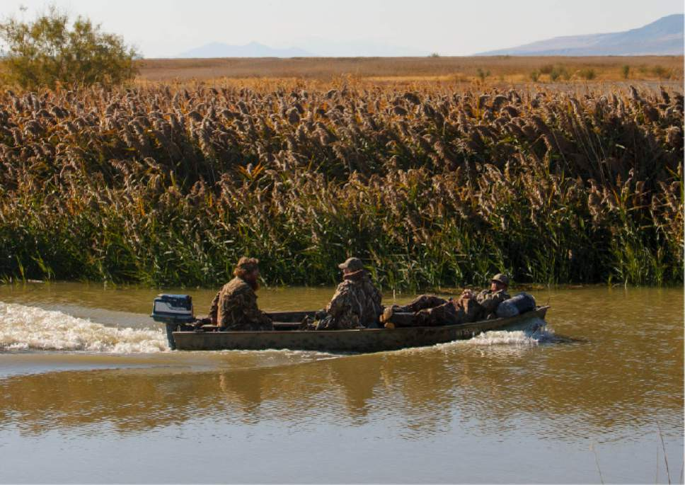 Trent Nelson  |  The Salt Lake Tribune Duck hunters at the Bear River Migratory Bird Refuge, Friday October 18, 2013.