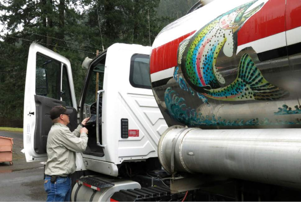 David Bronson, a driver who trucks coho salmon in water tankers for the state of Oregon, prepares to get into a truck filled with hundreds of baby coho salmon at the Cascade Fish Hatchery in Cascade Locks, Ore., on March 8, 2017. The Oregon Department of Fish and Wildlife, working with the Nez Perce tribe, is trucking 500,000 baby coho salmon 300 miles from the hatchery outside Portland to a remote corner of northeastern Oregon to reintroduce the species to the Lostine River.  (AP Photo/Gillian Flaccus)