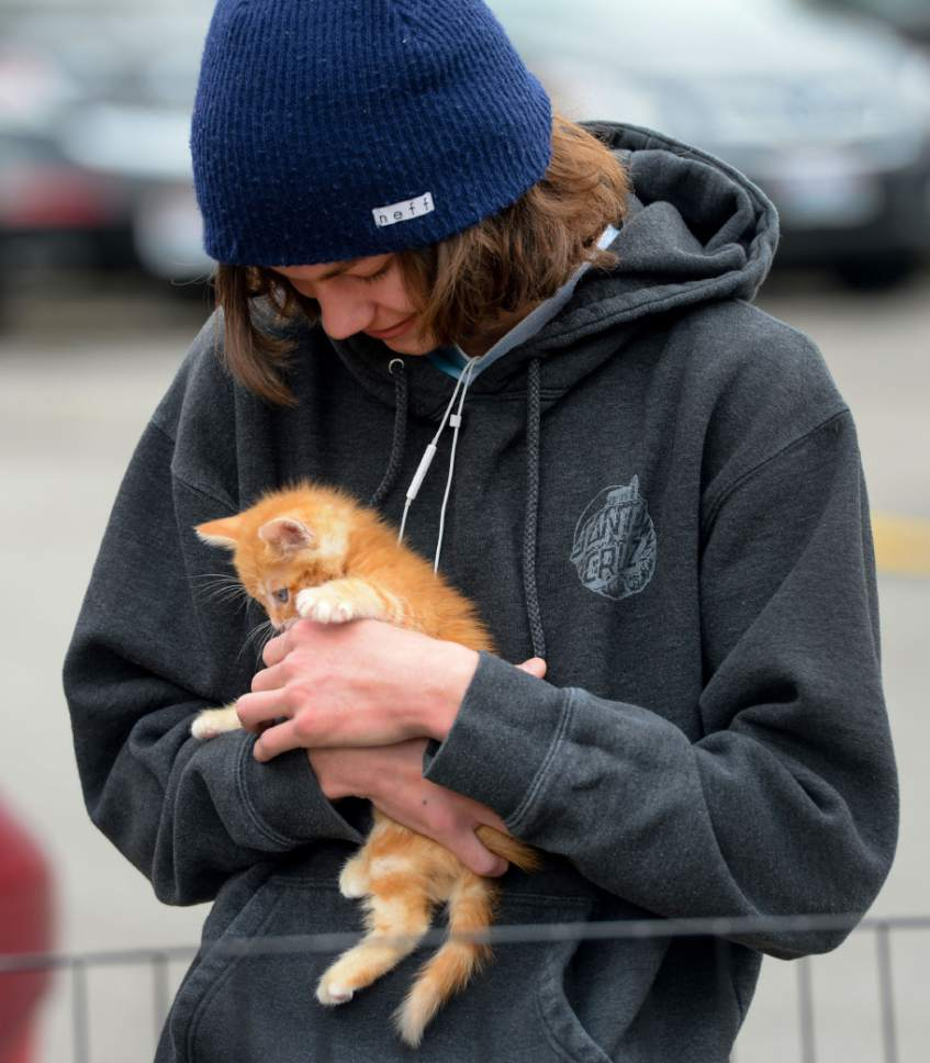 Steve Griffin  |  The Salt Lake Tribune   Ethan Kinney holds a kitten as Nuzzles & Co., a Park City non-profit that promotes awareness for pet adoption, teamed with Even Stevens sandwich shop during the Love Utah Give Utah fundraiser in Salt Lake City Thursday March 30, 2017. Nuzzles and Co.turned the entrance of Even Stevens into a puppy and kitten snuggle lounge.
