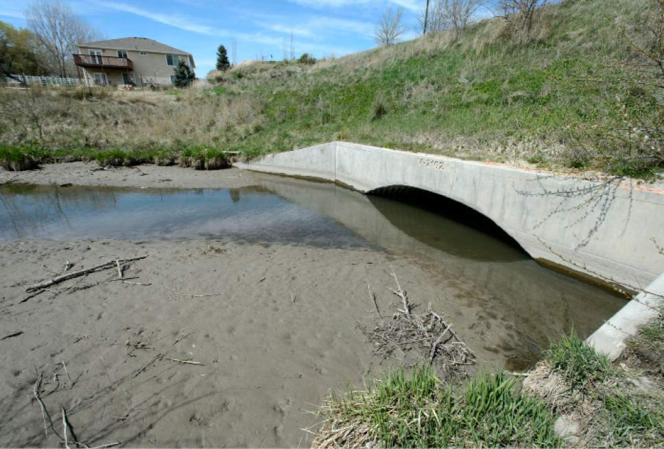 Steve Griffin  |  The Salt Lake Tribune  Salt Lake County officials are pressuring Draper resident Kelly McAdams and his neighbors to remove beaver dams -- shown here on Thursday, April 6, 2017 -- from Big Willow Creek where the stream flows across their properties. They insist the dams have been there for years and should remain because they are natural and provide wetland habitat, but officials say they pose a flood hazard.