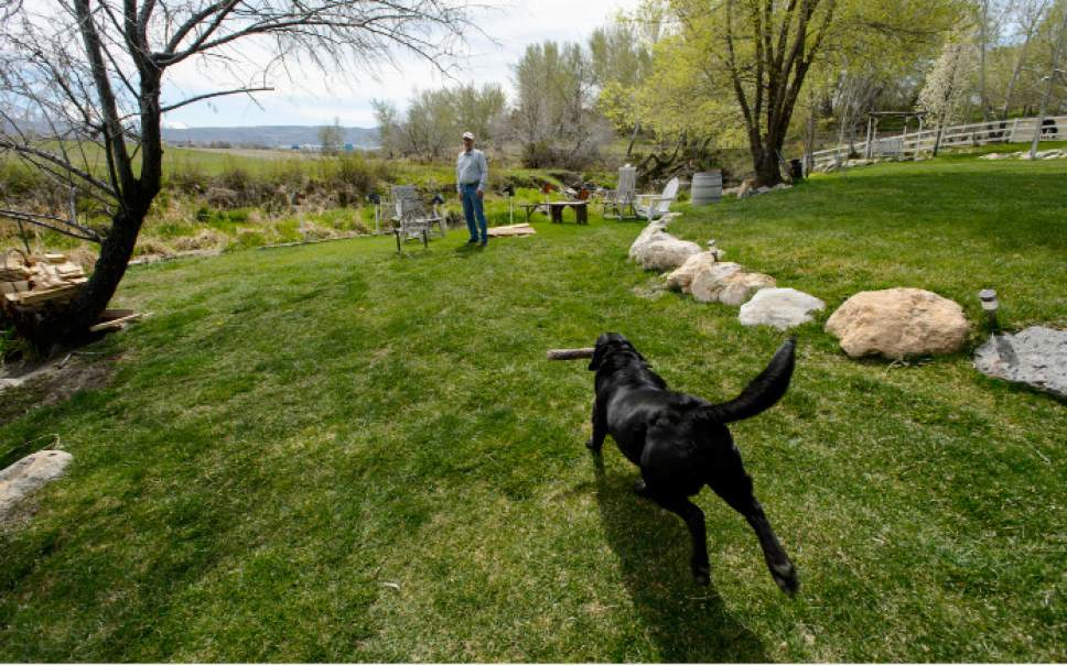 Steve Griffin  |  The Salt Lake Tribune  Kelly McAdams plays fetch with his dog, Koda, in the back yard of his home in Draper on Thursday, April 6, 2017. Salt Lake County officials are pressuring McAdams and his neighbors to remove the beaver dams from Big Willow Creek where the stream flows across their properties. They insist the dams have been there for years and should remain because they are natural and provide wetland habitat, but officials say they pose a flood hazard.