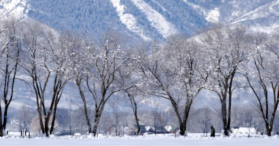 A solitary Trappist monk walks down a snowy tree-lined road near the monastary in Huntsville. Trappist Monks at the Abbey of the Holy Trinity in Huntsville, Utah. Photo by Trent Nelson 01.30.2002, 12:04:12 PM