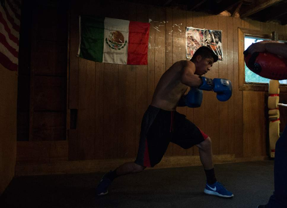 Leah Hogsten  |  The Salt Lake Tribune  Diego Alvarez, 17, of South Ogden, spars in the ring with his trainer Lalo Lopez at the tiny Los Gallitos Boxing Club gym, Tuesday, April 18, 2017. Alvarez  hopes to win amateur boxing's 114-pound national title at the Golden Gloves championship for the second time this weekend in Lafayette, LA.