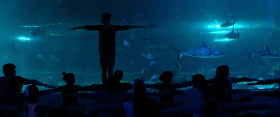 Francisco Kjolseth  |  The Salt Lake Tribune Loveland Living Planet Aquarium in Draper hosts a yoga class for 88 people in front of the 300,000-gallon shark tank in January.  Yoga With the Sharks is held the first Monday of each month. The aquarium also offers yoga in the rainforest is the third Saturday of alternating months.