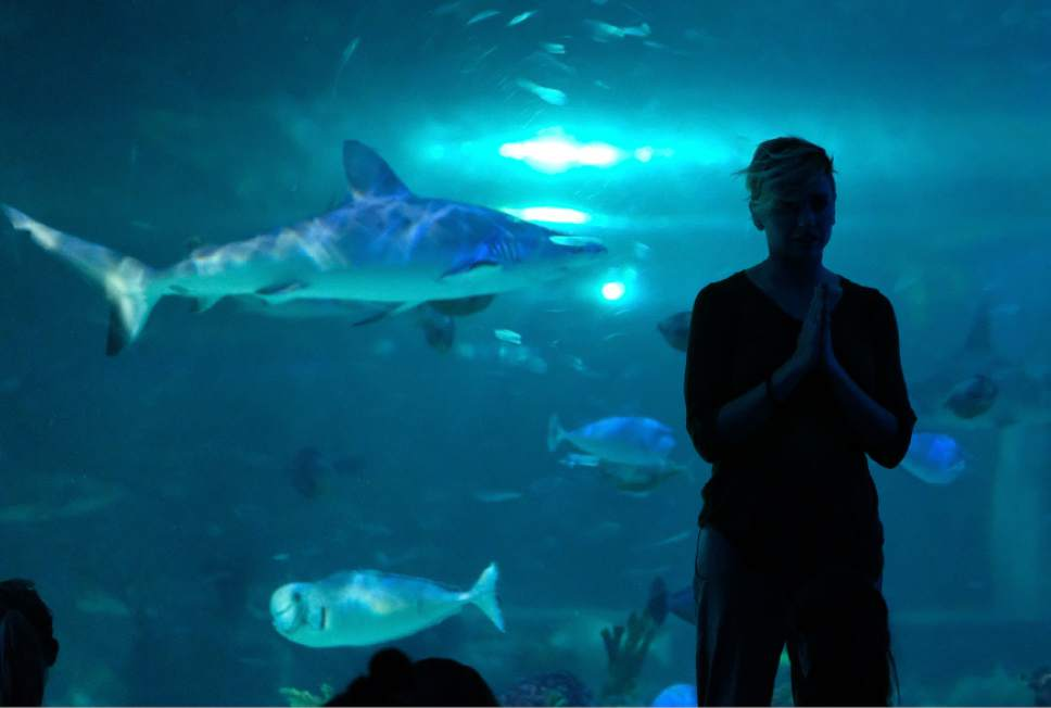 Francisco Kjolseth     The Salt Lake Tribune Loveland Living Planet Aquarium in Draper hosts a yoga class for 88 people in front of the 300,000-gallon shark tank in January.  Yoga With the Sharks is held the first Monday of each month. The aquarium also offers yoga in the rainforest is the third Saturday of alternating months.