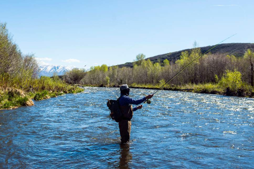 Chris Detrick     The Salt Lake Tribune Luis Parriles, of Orem, fishes in the Provo River near Heber City Friday, May 5, 2017.