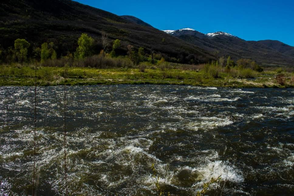 Chris Detrick     The Salt Lake Tribune The Provo River near Heber City on Friday, May 5, 2017.