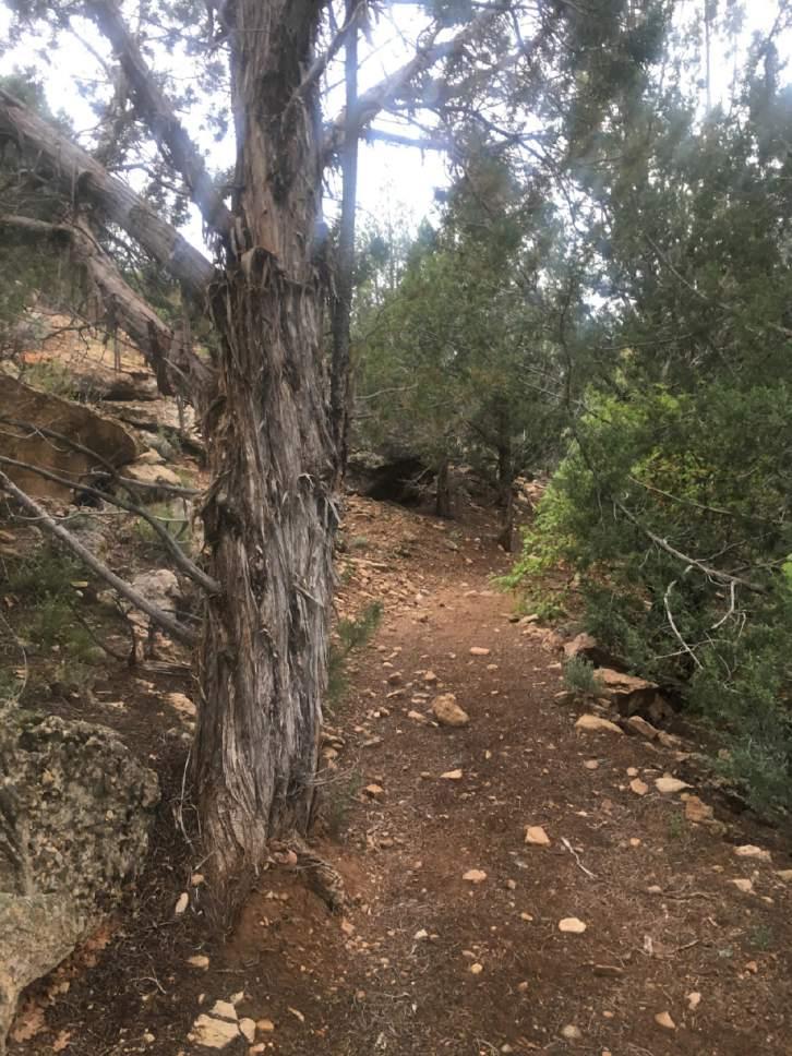 Brian Maffly |  The Salt Lake Tribune  Recapture Canyon.