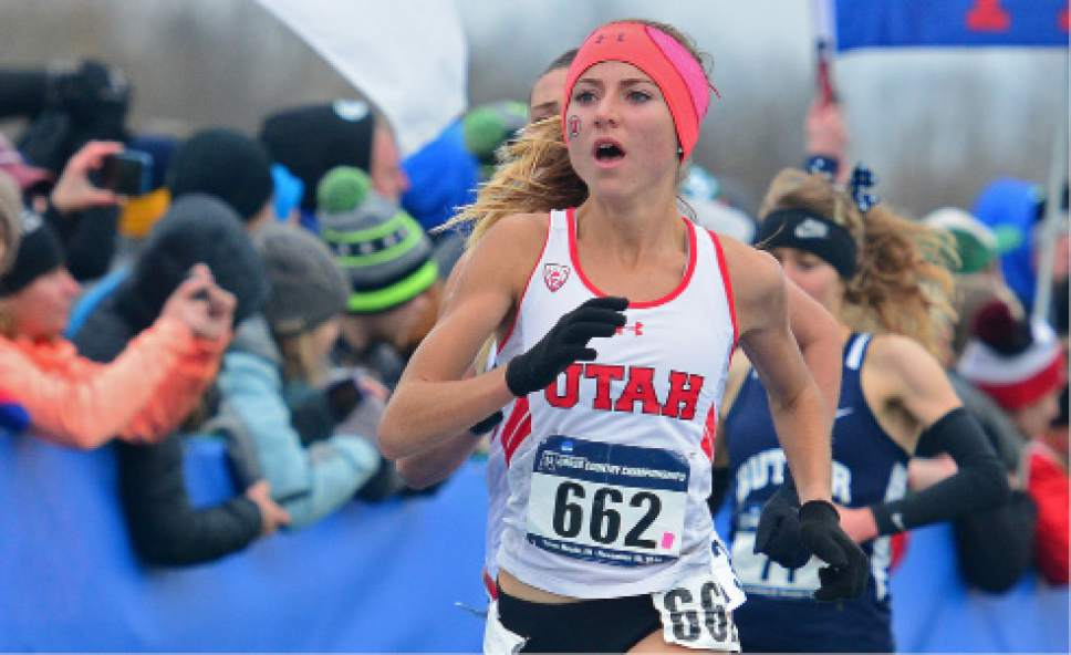    Courtesy University of Utah athletics   Grayson Murphy runs at cross country nationals last November. The junior runner and West High graduate has become one of Utah's best distance runners since transferring from Santa Clara (Calif.). Murphy finished 53rd overall, just outside of All-America status.