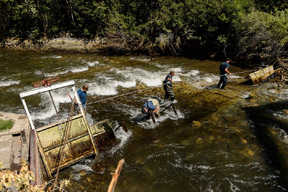 Trent Nelson  |  The Salt Lake Tribune Workers put in a dam to divert and lower water levels in the Provo River as the search for a missing 4-year-old girl continued, Tuesday May 30, 2017.