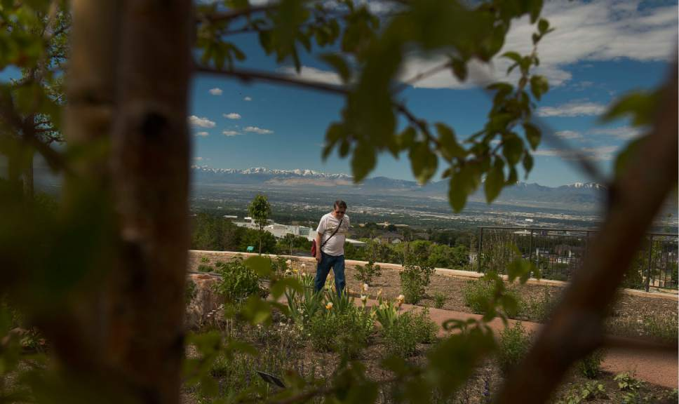 Leah Hogsten  |  The Salt Lake Tribune Gene Blundell walks the Water Conservation Garden for ideas of flowers and shrubs to plant on his father's property. Red Butte's new Water Conservation Garden  demonstrates that beautiful gardens do not require heavy applications of water.