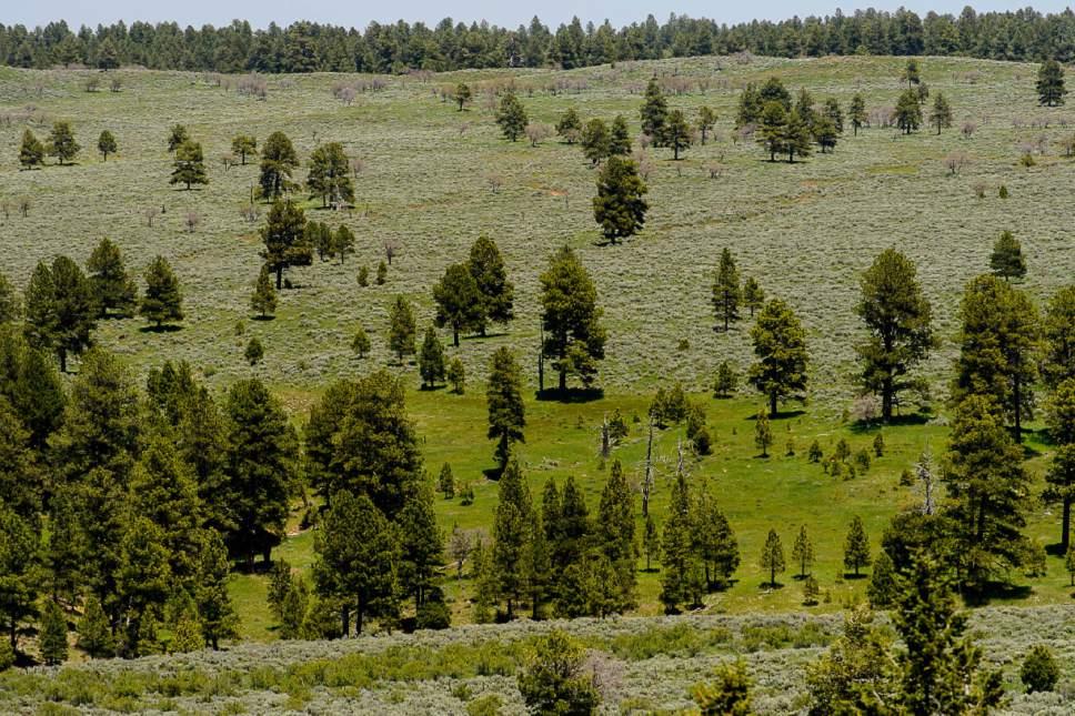 Trent Nelson  |  The Salt Lake Tribune Scenery in the Bears Ears National Monument, Friday June 9, 2017.