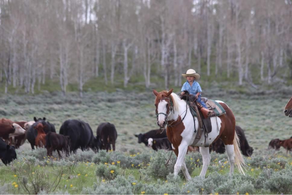 Photo courtesy Jeanie Wilcox Jensen Jett Christensen herds cows on Tavaputs Plateau.