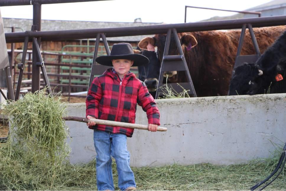 Photo courtesy Jeanie Wilcox Jensen Jax Christensen helps feed the cattle.