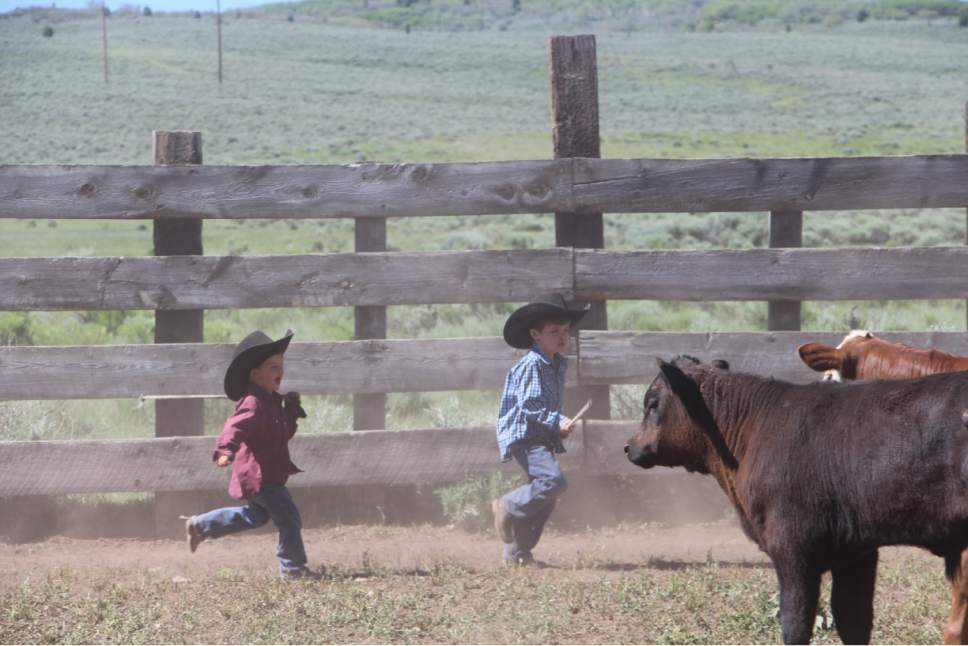 Photo courtesy Jeanie Wilcox Jensen Jett and Jax Christensen play in a corral at the end of the winter range roundup.