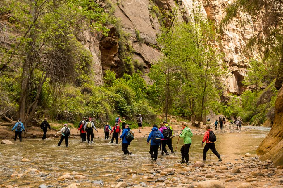 Trent Nelson  |  The Salt Lake Tribune  Hikers in the Narrows, Zion National Park, Wednesday May 6, 2015.