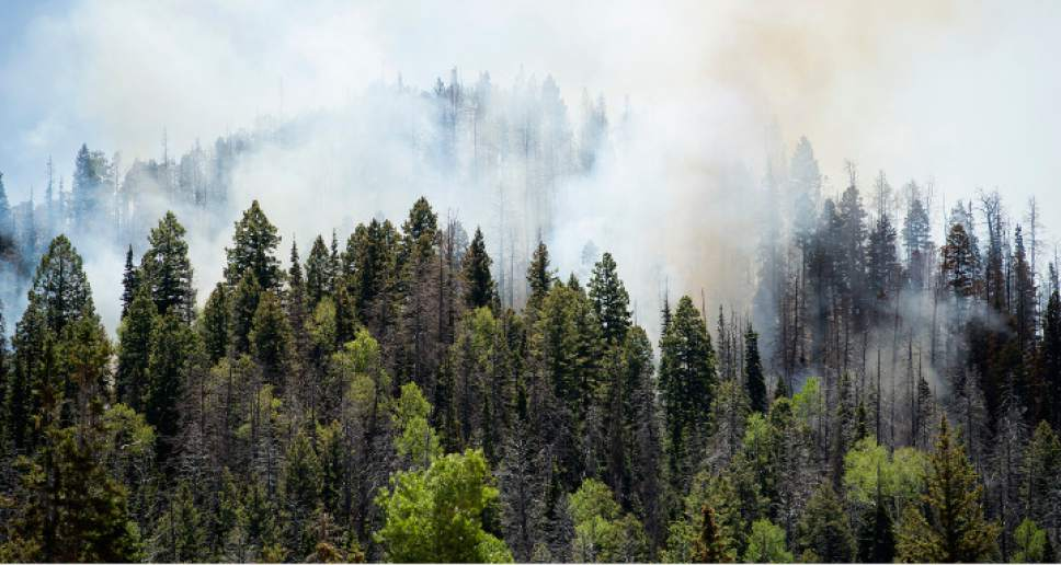 Leah Hogsten  |  The Salt Lake Tribune A wildfire that forced hundreds to evacuate from the southern Utah ski town of Brian Head burns along State Route 143, the primary road to the town, Sunday, June 18, 2017. Some of the graying spruce trees, killed by bark beetles, can be seen.