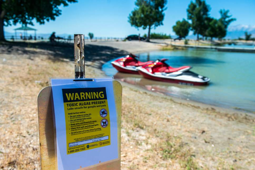 Chris Detrick     The Salt Lake Tribune A posted sign warning about a toxic algal bloom in Utah Lake Thursday, June 29, 2017.