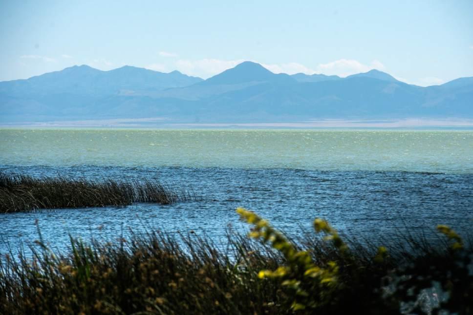 Chris Detrick     The Salt Lake Tribune A toxic algal bloom in Utah Lake Thursday, June 29, 2017.