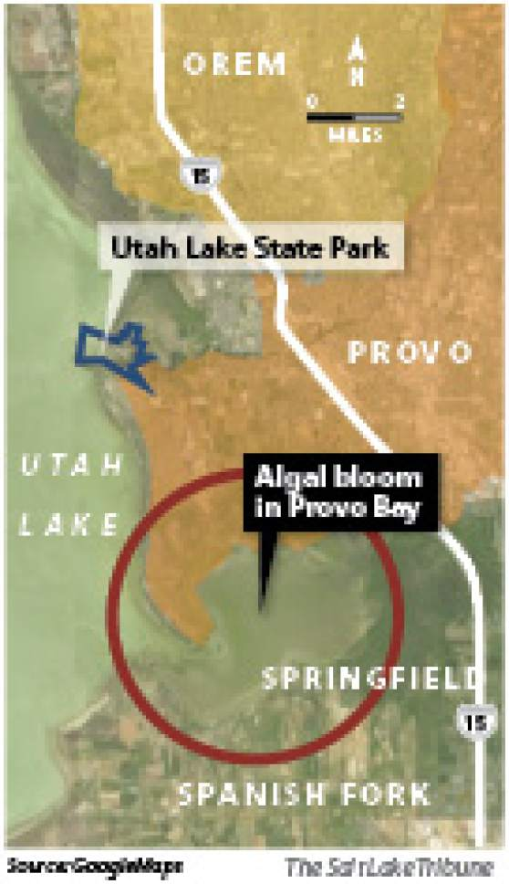 Algal bloom's return Warning signs have been placed around Provo Bay alerting Fourth of July weekend recreationists that toxins in the water could reach unhealthy levels as the algal bloom grows.