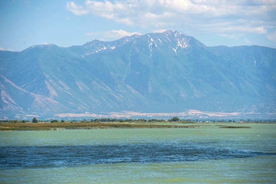 Chris Detrick    Tribune file photo A toxic algal bloom in Utah Lake in June. Officials confirmed Wednesday that the algal bloom on Utah Lake is growing and has turned toxic.
