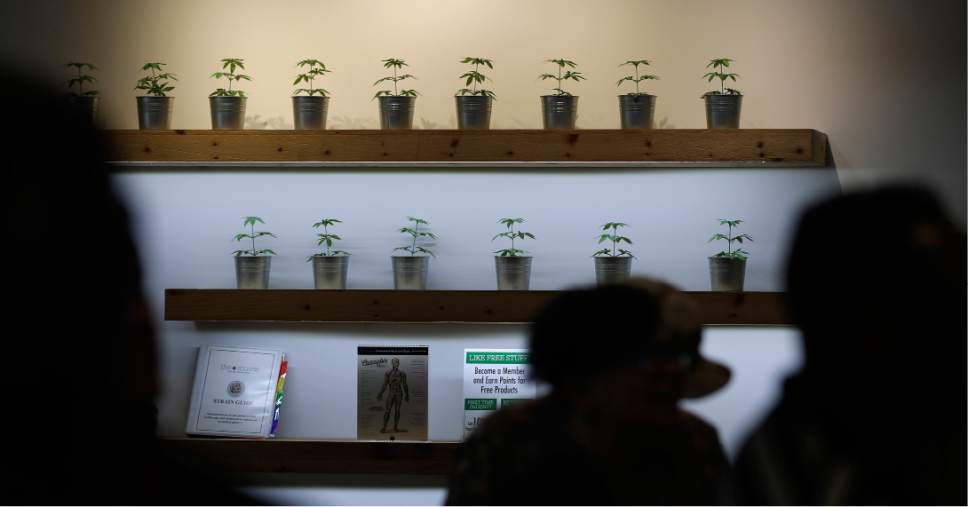 FILE- In this July 1, 2017, photo, plants are on display during the first day of recreational marijuana sales at The Source dispensary in Las Vegas. The Nevada Tax Commission is expected to approve an emergency regulation on Thursday to issue distribution licenses needed to address an anticipated supply shortage in the coming weeks. (AP Photo/John Locher, File)