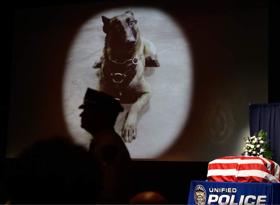 """Scott Sommerdorf      The Salt Lake Tribune   An image of """"Dingo"""" is shown during the memorial service for the Unified Police Department dog shot and killed in the line of duty July 6 while working with his K-9 handler Sgt. Chad Reyes, Saturday, July 15, 2017."""
