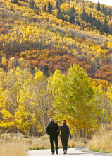 Hikers, bikers and walkers made use of the trails near Park City, UT as autumn colors show up on the mountain sides. Photo by Danny Chan La/The Salt Lake Tribune 10-7-2007