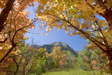 Mt. Timpanogos is framed by autumn  color near The Sundance Resort on   Wednesday, September 23,2009  photo:Paul Fraughton/ The Salt Lake Tribune