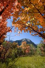 Paul Fraughton  |  Tribune file photo Mt. Timpanogos is framed by autumn  leaves near The Sundance Resort.
