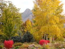 Fall colors were on display near Cottonwood Heights last week. Photo by Pomera M. Fronce