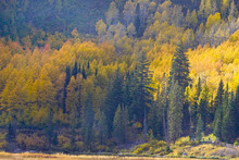 A couple (lower right)  take in the splendor of autumn leaves as they walk around Big Cottonwood Canyon's Silver Lake on  Monday, October 6 2008. Paul Fraughton / Salt Lake Tribune
