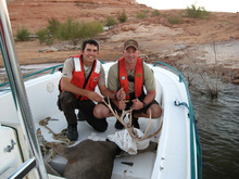 Cheston Slater  |  Utah State Parks Sean Spencer, left, a conservation officer with the Utah Division of Wildlife Resources, and Utah State Parks ranger James Morgan prepare to release a mule deer that had been trapped in a canyon at Lake Powell. They caught and released the buck in another area.