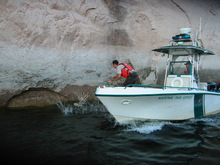 Cheston Slater  |  Utah State Parks  Sean Spencer, a conservation officer with the Utah Division of Wildlife Resources, attempts to lasso a swimming buck mule deer while Nole Rupel of the National Park Service captains the boat.