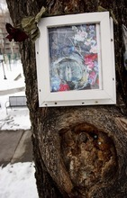 Trent Nelson     The Salt Lake Tribune The Mary Tree was vandalized in 2002.