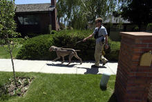 Steve Griffin  |  The Salt Lake Tribune  Search dogs work through the Salt Lake City neighborhood of 14-year-old Elizabeth Smart, who was kidnapped from her home early June 5, 2002.