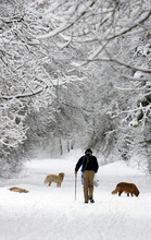 Francisco Kjolseth  |  The Salt Lake Tribune Ross Faison of Salt Lake City takes his two dogs Lady and Sugar for a walk along with Freya, a friend's dog, on Monday, March 7, 2011, following fresh snow in Mill Creek Canyon.