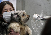 Gregory Bull  |  The Associated Press A woman holds her dog as they are scanned for radiation at a temporary scanning center for residents living close to the quake-damaged Fukushima Dai-ichi nuclear power plant in Koriyama, Fukushima Prefecture, Japan.