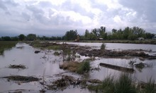 Cimaron Neugebauer | The Salt Lake Tribune A levee along the Weber River in the rural community of Warren breached Thursday morning.