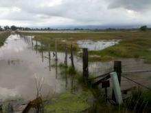 Chris Detrick  |  The Salt Lake Tribune  A field is flooded after a levee break on the Weber River, Thursday June 9, 2011.