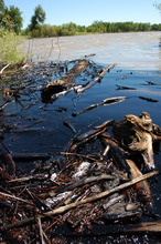 Matthew Brown     The Associated Press Oil from a ruptured ExxonMobil pipeline is seen in the Yellowstone River and along its banks near Laurel, Mont., Saturday. The pipeline break was contained early Saturday morning but the spill stretched over dozens of miles.