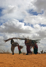 Somali refugees carry firewood  outside  Dadaab, eastern Kenya, 100 kms (60 miles) from the Somali border, Friday Aug. 5, 2011. Somali government troops opened fire Friday in Mogadishu on hungry civilians, killing at least seven people, as both groups made a grab for food at a U.N. distribution site in the capital of this famine-stricken country, witnesses said. The drought and famine in the horn of Africa has  killed more than 29,000 children under the age of 5 in the last 90 days in southern Somalia alone, according to U.S. estimates. The U.N. says 640,000 Somali children are acutely malnourished, suggesting the death toll of small children will rise. (AP Photo/Jerome Delay)