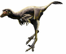 Talos sampsoni is a member of a rare group of feathered, bird-like theropod dinosaurs whose evolution in North America has been a longstanding source of scientific debate, largely for lack of decent fossil material. Talos represents the first definitive troodontid to be named from the Late Cretaceous of North America in over 75 years. Illustration by Jorge Gonzalez. Courtesy Bureau of Land Management