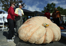 Francisco Kjolseth  |  The Salt Lake Tribune Ross and Kaye Bowman, of Brigham City, have their picture taken with his 1,174-pound pumpkin at the second annual Harvest Festival in Lehi on Saturday as part of the giant pumpkin weigh-off. Bowman, a former rocket scientist who for a brief moment held the state record, is the first to enter more than one pumpkin weighing more than 1,000 pounds and in this case brought in three for a total weight of 3,269 pounds.