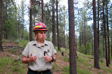 Rick Egan    The Salt Lake Tribune   Cheri Hartless, Bitterroot National Forest silviculturist, stands Aug. 1, 2011, in a thinned forest where ponderosa pines have adequate sun and moisture to fight beetles.
