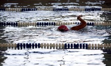 Trent Nelson  |  The Salt Lake Tribune Swimmers on the Wasatch Front Fish Market swim team practice recently at the Gene Fullmer Recreation Center in West Jordan.