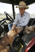 Francisco Kjolseth  |  The Salt Lake Tribune  Jay Tanner pets Nelson, his red healer cow dog, as he takes a break from bailing grass in the Grouse Creek Valley. Tanner and his brothers are among the increasing number of Utah ranchers and farmers using computers and the Internet to run their businesses.