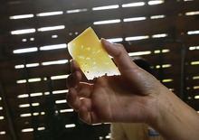Scott Sommerdorf  |  The Salt Lake Tribune              Rockhill Cheese intern Abby Phunder holds a slice of Wasatch Mountain Gruyere at the creamery in Richmond.