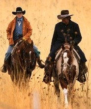 Leah Hogsten   The Salt Lake Tribune   BJ Charlton of West Palm Beach, FL (left) and Kevin McNiven with Americas Cowboys of Jackson Hole, Wyo., ride together during the roundup. Charlton heard about the roundup in her local newspaper and flies from Florida to help during the two-day herding. McNiven supplies riders like Charlton with a one of his 20 horses he brings down from Wyoming. Nearly 250 horseback riders took to the slopes of Antelope Island during the annual bison roundup of some 600-plus buffalo on Saturday.